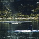 Postcards from Canada, A Whale Watching Adventure