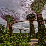 Singapore Quest for Good Service – Dining Out