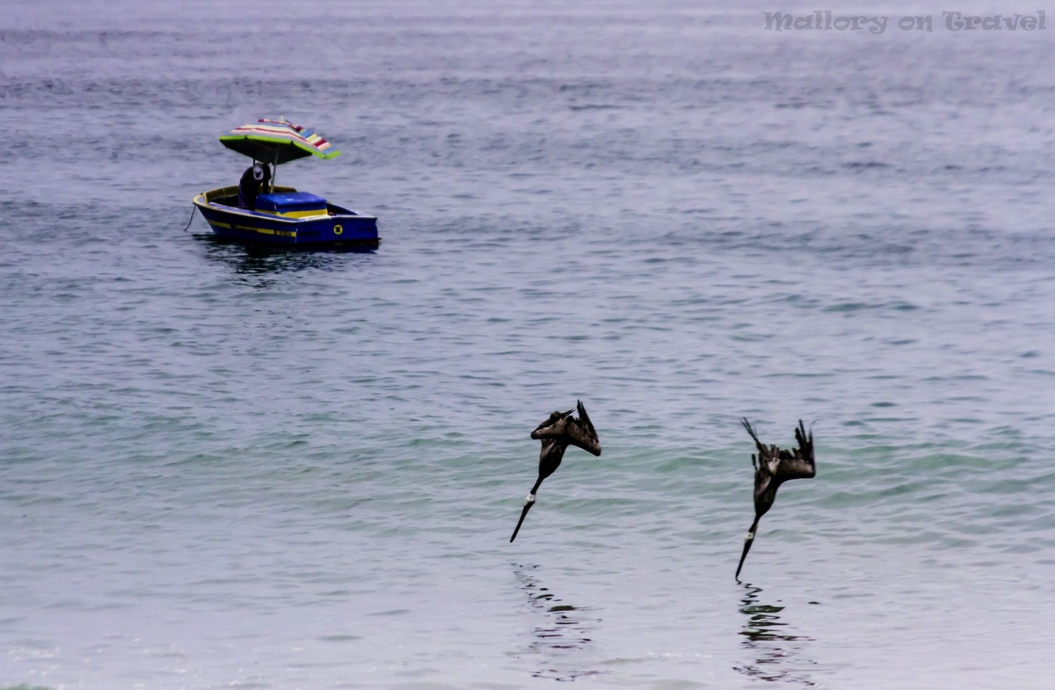 Brown pelicans diving and fishing off the beach at Puerto Vallarta in Mexico on Mallory on Travel adventure travel, photography, travel Iain_Mallory_300-3