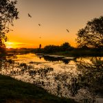 Postcards from a Pantanal Sunset