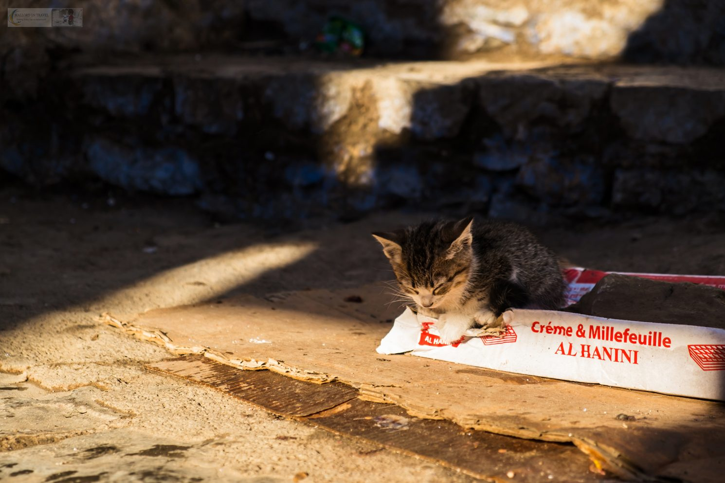 One of Chefchaouens cats; a kitten of the Blue city sleeps in a disused pizza delivery box in the streets of the Moroccan city, North Africa on Mallory on Travel adventure travel, photography, travel Iain Mallory_Morocco 081