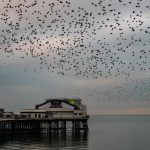 Blackpool North Pier Murmuration; Balletic Movements at Dusk