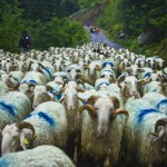 Agritourism – Sexy Farming in the French Pyrénées
