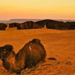 Postcard from Sunrise in the Sahara Desert