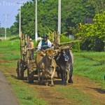 Culture in Cuba; Travelling the Rice Road to Havana