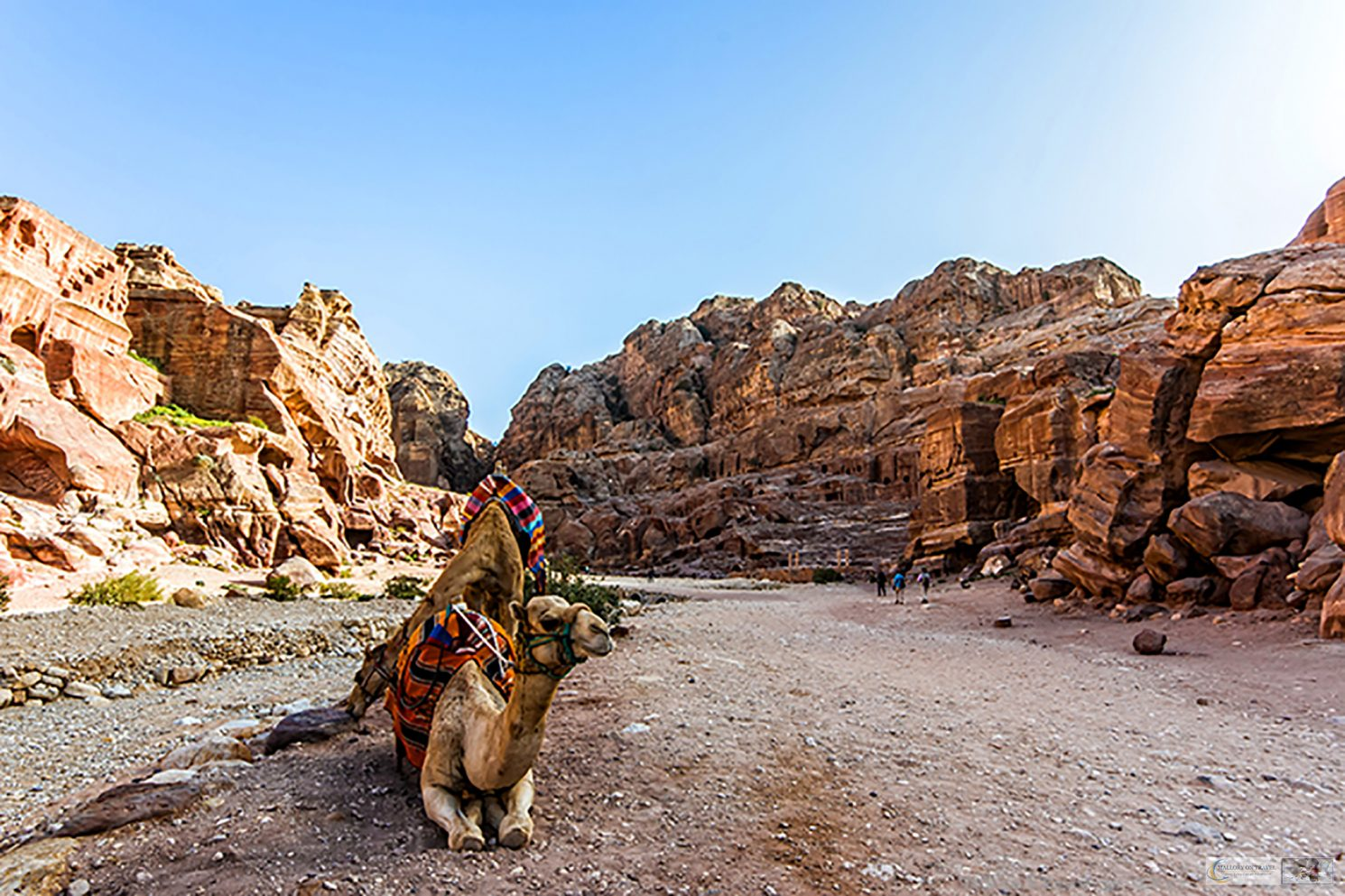 Camels or the ships of the desert in front of rock formations in Petra, Jordan on Mallory on Travel adventure, adventure travel, photography iain_mallory_jordan1408887