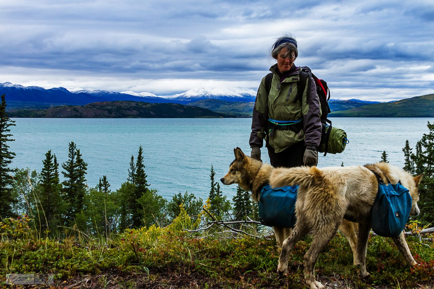 Jeninne Cathers and the sled dogs of Cathers Wilderness Adventures on the shores of Lake Laberge, near Whitehorse in The Yukon, Canada on Mallory on Travel adventure travel, photography, travel iain-mallory_yukon-010