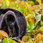 Monkeys; An Amazing Animal Family – Photo Essay