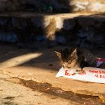 Postcards of the Chefchaouen Cats