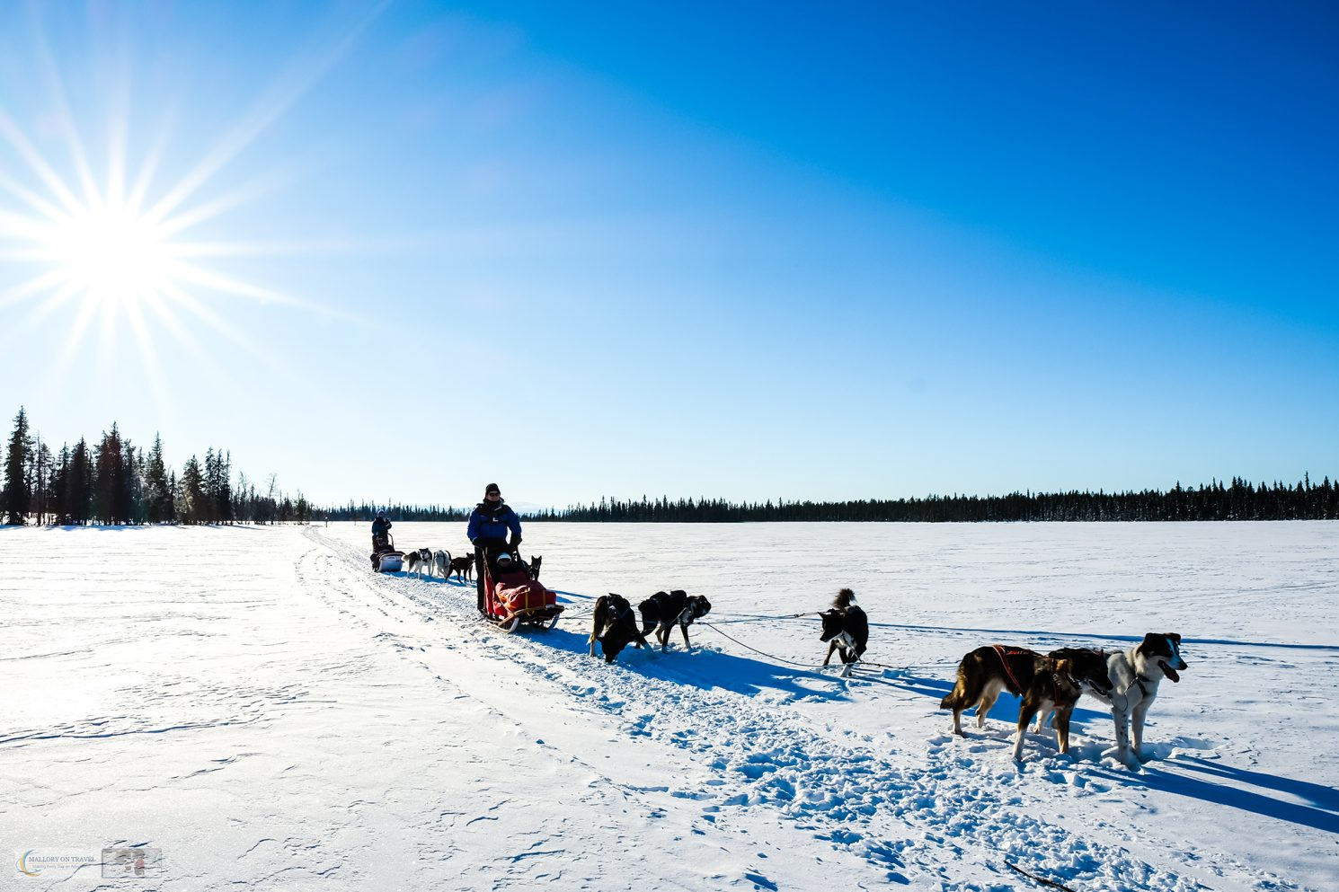 Sled dogs and dog sledding in Lappeasuando in the Swedish Lapland, within the Arctic Circle in the north of Sweden on Mallory on Travel adventure travel, photography, travel Iain Mallory_Lapland-1-245
