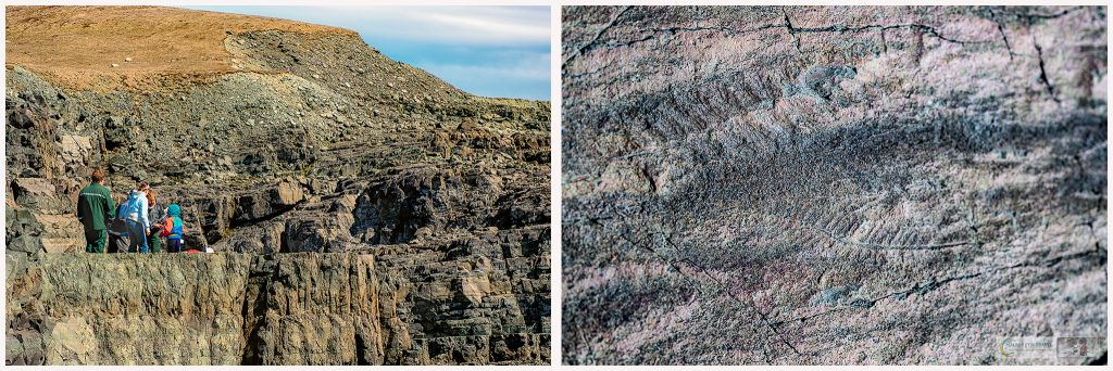 600 million year old fossils at the UNESCO heritage site of Mistaken Point, at the southern tip of the Avalon Peninsula in the province of Newfoundland and Labrador, Canada on Mallory on Travel adventure travel, photography, travel Mistaken Point montage