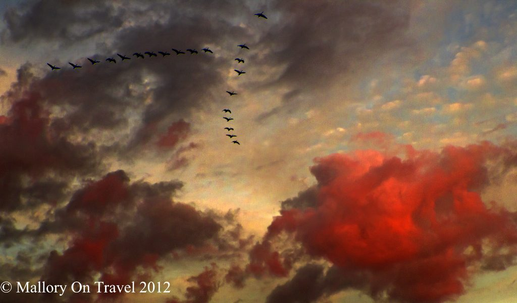 Outdoors in Autumn; Migrating geese in Autumn, flying in formation over Slaford, near Manchester on Mallory on Travel adventure travel, photography, travel 2018 Iain Mallory-300-6