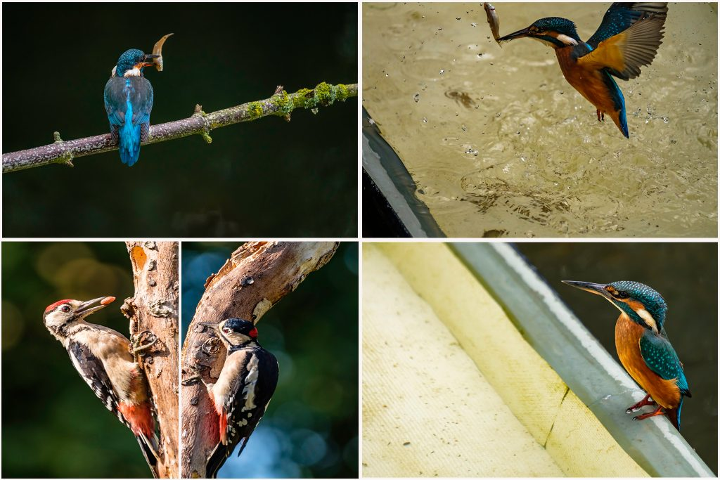 City break; Birdwatching in the hide, kingfishers and woodpeckers on Mallory on Travel adventure travel, photography, travel