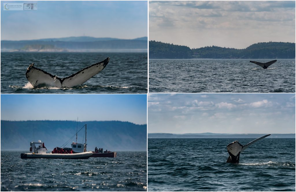 Whale watching off Campobello Island, Passaquoddy Bay in the maritimes province of New Brunswick, Canada on Mallory on Travel adventure travel, photography, travel - Mallory_NewBrunswick.whales